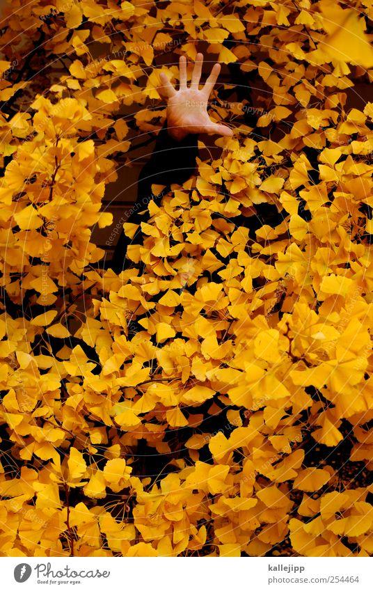 ich weiß was du letzten herbst getan hast Mensch Natur Baum Pflanze Blatt Tier Herbst Umwelt Finger Suche Hilfsbereitschaft Bauch Gartenarbeit Versteck
