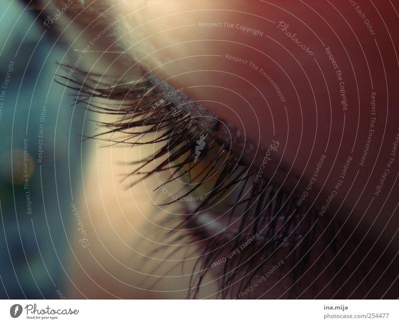 habs im visier blau grün schön ruhig Auge gelb feminin Gefühle träumen Stimmung glänzend Sicherheit beobachten Punkt Vertrauen Schminke