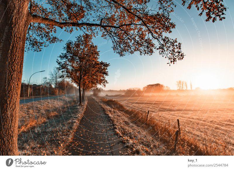 Autumn Light Natur Pflanze blau schön Landschaft Sonne Baum Erholung ruhig Ferne Straße Wärme Herbst Wege & Pfade Freiheit orange