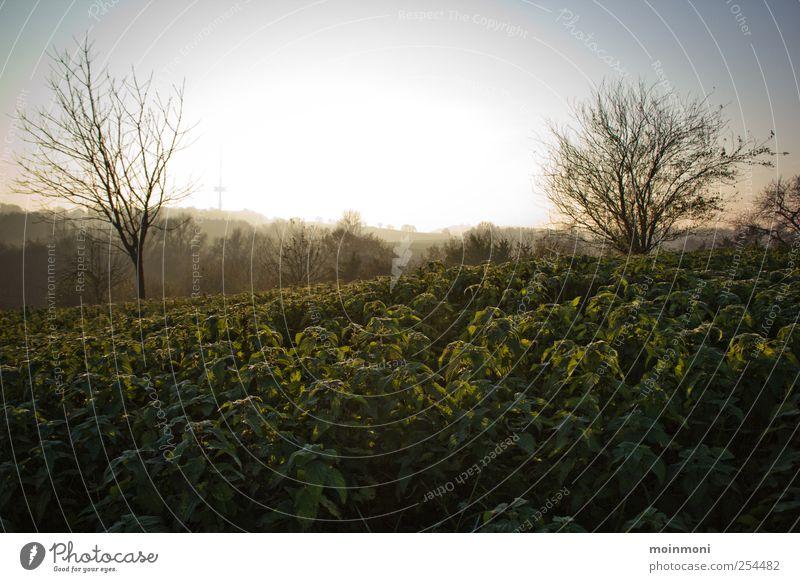 Herbstspaziergang Natur Baum Ferien & Urlaub & Reisen Ferne Erholung Umwelt Freiheit Feld Ausflug wandern Abenteuer Sträucher Idylle Dorf Schönes Wetter