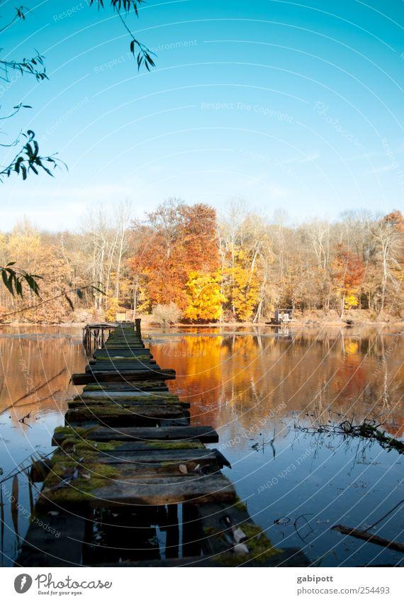 Kein Badewetter Umwelt Natur Landschaft Wasser Himmel Wolkenloser Himmel Sonne Herbst Wetter Schönes Wetter Baum Wald Seeufer Teich Steg schön blau braun