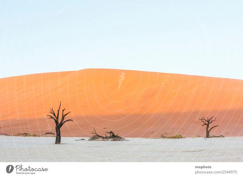 Deadvlei erwacht zum Leben Ferien & Urlaub & Reisen Tourismus Abenteuer Ferne Safari Umwelt Natur Landschaft Erde Sand Klima Wärme Dürre Baum Wüste Dead Vlei