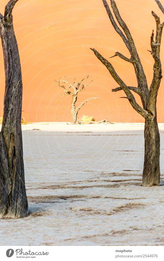 Durchblick Ferien & Urlaub & Reisen Tourismus Ferne Safari Umwelt Natur Landschaft Sand Klima Wärme Dürre Baum Wüste Dead Vlei Menschenleer braun orange Fernweh