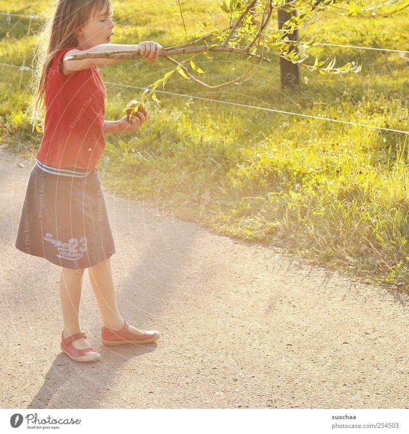 mädchen spielt mit einem ast | chamansülz Kind Mädchen Kindheit Haut Kopf Haare & Frisuren Gesicht Arme 1 Mensch 3-8 Jahre Umwelt Natur Sonnenlicht Sommer Klima