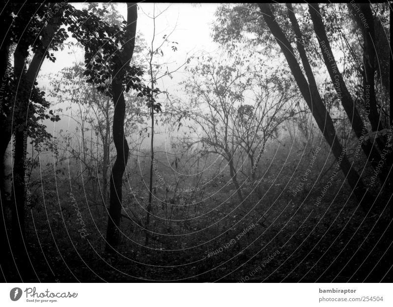 Im Nebel Natur Baum Pflanze Wald kalt Herbst Umwelt grau Wetter Sträucher