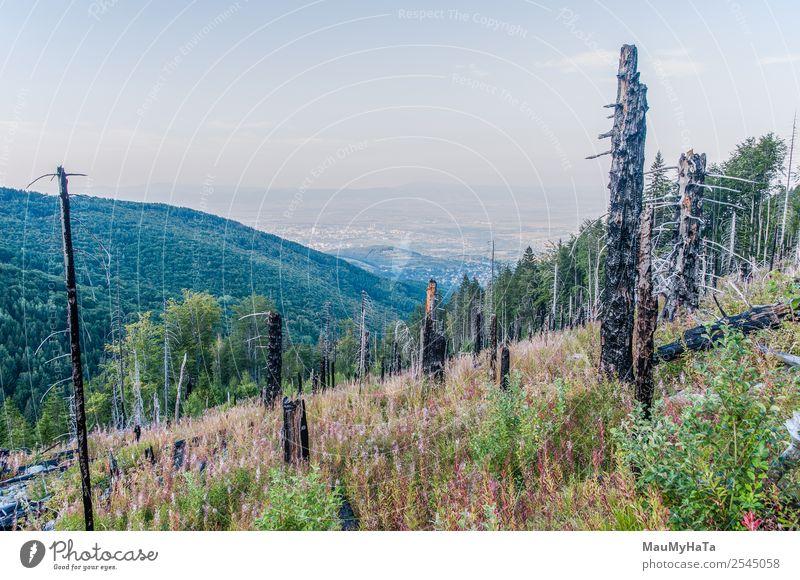 Nach einem Waldbrand Berge u. Gebirge Umwelt Natur Landschaft Himmel Klima Baum Gras heiß natürlich wild Tod Desaster Zerstörung Feuer verbrannt hinten brennend