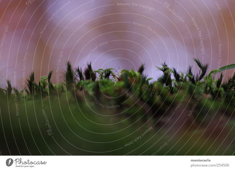 Miniwald Umwelt Natur Pflanze Herbst Schönes Wetter Gras Moos Grünpflanze Wildpflanze ästhetisch nah natürlich grün weiß Farbfoto mehrfarbig Außenaufnahme