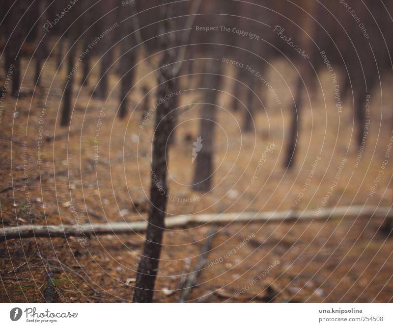 verirren Umwelt Natur Herbst Wald Bewegung dunkel verrückt Angst gefährlich Verzweiflung Alkoholsucht Drogensucht Alkoholisiert träumen Irritation Farbfoto