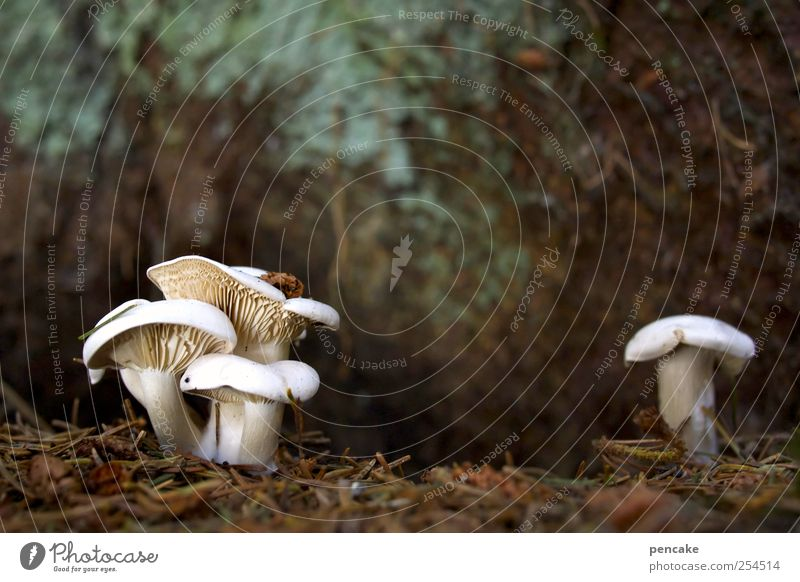 kobolde Natur Pflanze Erde Herbst Pilz Wald Gartenzwerge Fabelwesen Kobold hocken Blick Zusammensein niedlich unten blau braun weiß Eifersucht Misstrauen
