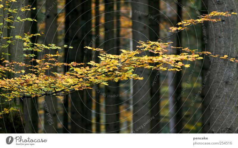 der schwarm Natur Baum Wald Herbst Landschaft Holz Wandel & Veränderung Leichtigkeit Abenddämmerung Herbstlaub Buche