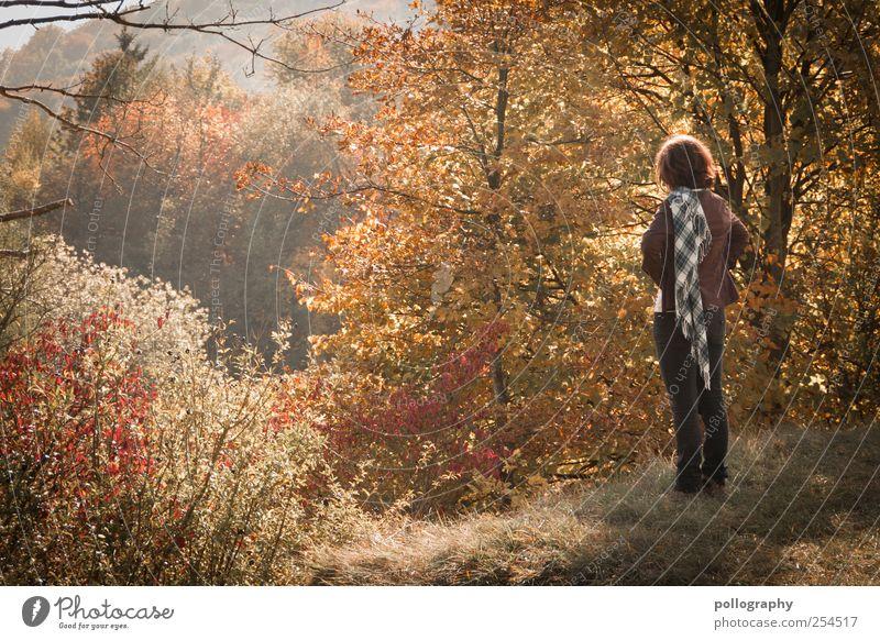 Herbsttag Mensch Frau Natur Baum rot Pflanze Farbe Erwachsene Leben Gras träumen orange Sträucher Jeanshose Hügel Sehnsucht