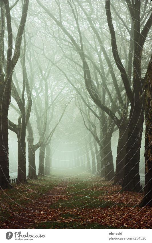 Königsallee Baum Einsamkeit kalt Herbst Tod Wege & Pfade Traurigkeit Stimmung träumen Wetter Angst Nebel Trauer Ast Sehnsucht gruselig