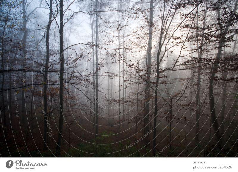 Deep Natur Wald kalt Herbst Umwelt Stimmung Nebel Klima Urelemente Zeichen mystisch