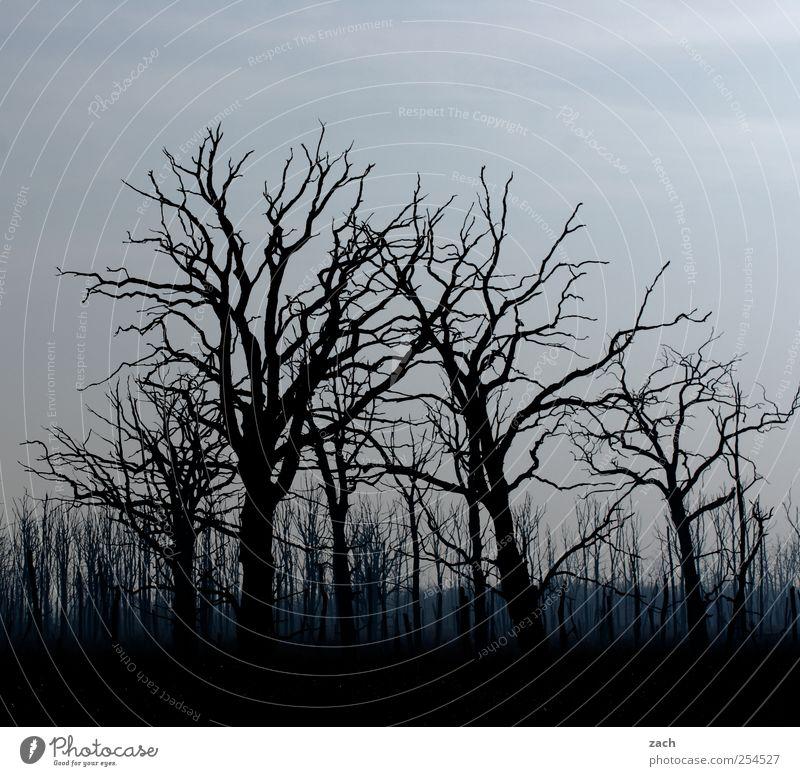 Herbst Natur blau Baum Pflanze Winter schwarz Wald dunkel Tod Umwelt Landschaft Holz Traurigkeit Angst Nebel