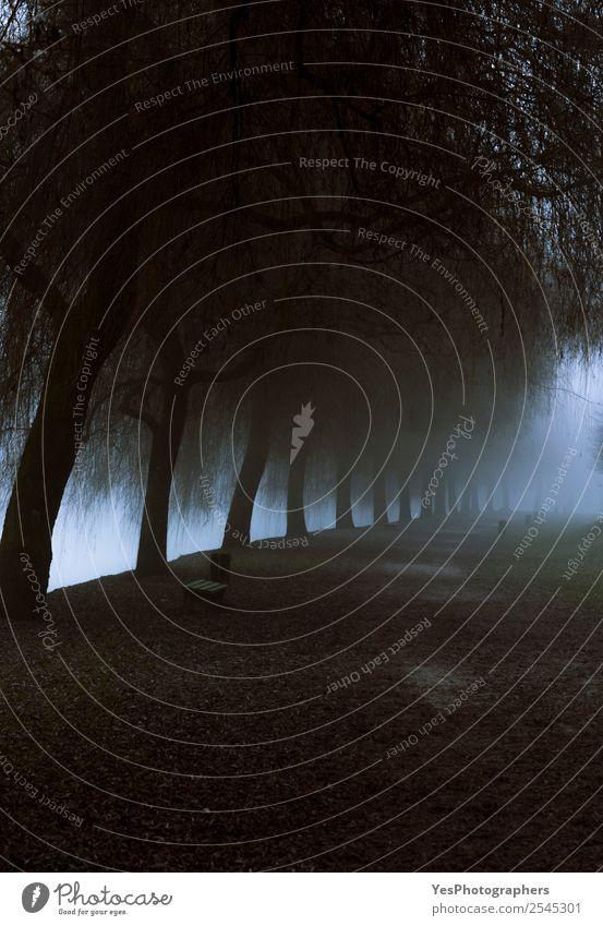 Neblige Parkallee, die zu dichtem Nebel führt. Ferien & Urlaub & Reisen Winter Natur Landschaft Wetter Baum Küste Fluss Sehenswürdigkeit Wahrzeichen dunkel