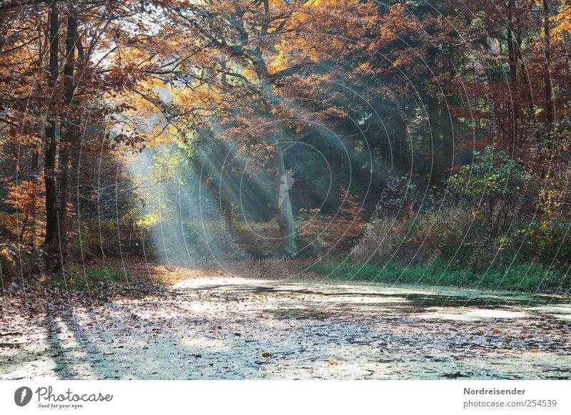 Tümpel im Wald Natur Farbe Erholung Landschaft ruhig Herbst Stimmung Ausflug Vergänglichkeit Streifen Hoffnung Glaube Duft Meditation Teich