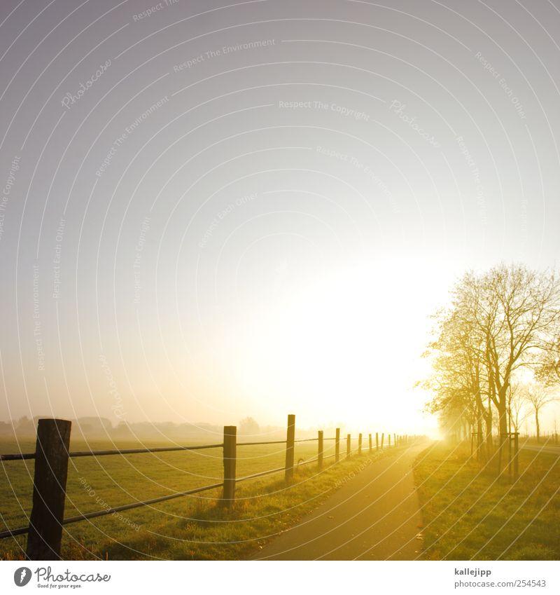 road to nowhere Himmel Natur Baum Pflanze ruhig Tier Straße Herbst Wiese Umwelt Landschaft träumen Wetter Feld Erde Nebel