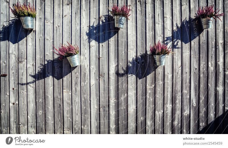 Holzfassade mit Highlights. Haus Schutz Geborgenheit Blumentopf Holzhütte Berghütte Holzfußboden Holzwand Holzvertäfelung Farbfoto