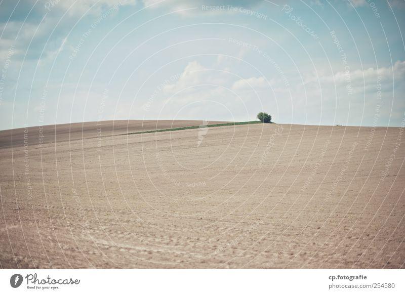 Paesaggio numero uno Baum Sonne Sommer Wolken Landschaft Erde Feld modern Schönes Wetter