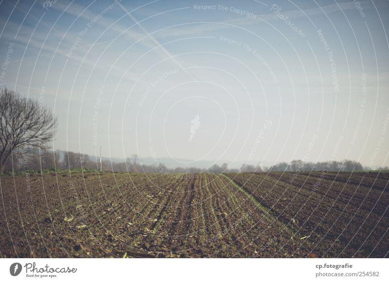 Numero tre del paesaggio Landschaft Herbst Feld modern Kondensstreifen Nutzpflanze