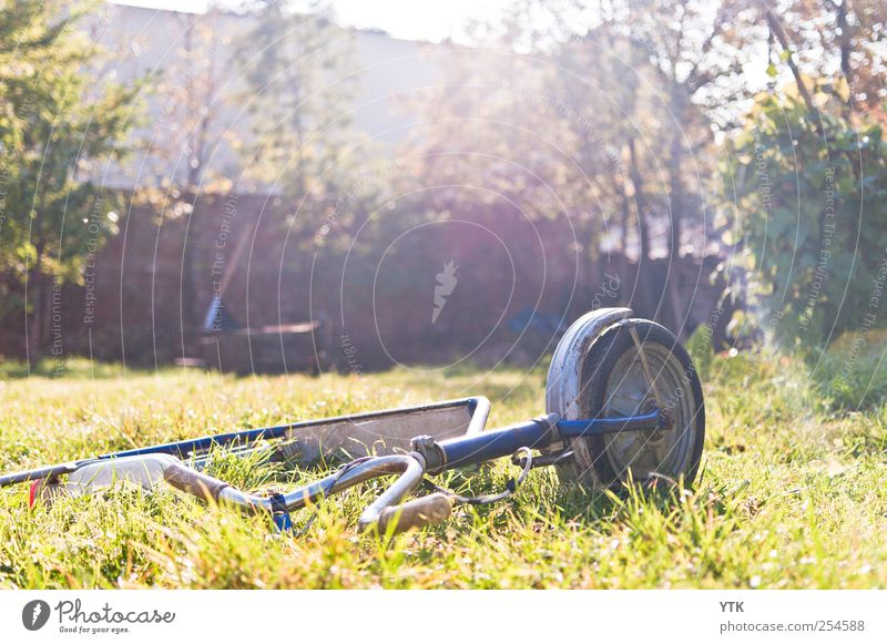 Liegen gelassen II Umwelt Natur Landschaft Pflanze Sonne Sonnenlicht Herbst Schönes Wetter Baum Gras Park Wiese hell Tretroller Spielzeug vergessen alt Rost