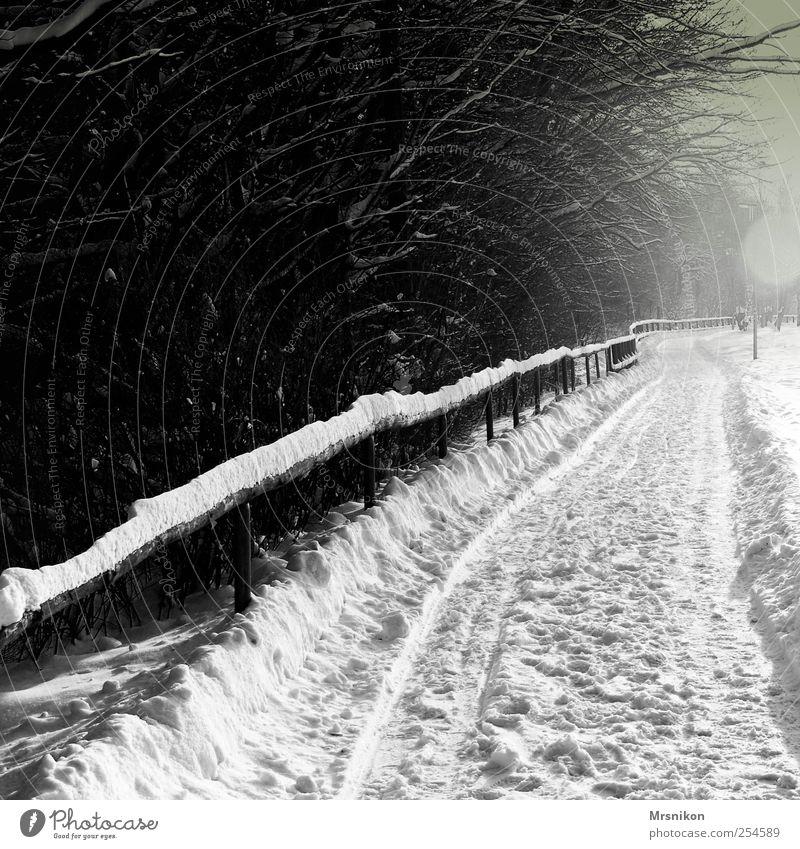 in die ferne Natur Landschaft Winter Eis Frost Schnee Baum Park Feld Wald Wege & Pfade dunkel grau schwarz bizarr kalt Schwarzweißfoto Gedeckte Farben