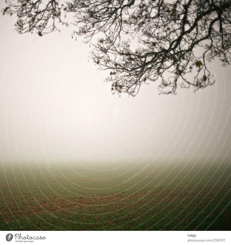 spooky Q Natur Landschaft Himmel Horizont Herbst Klima Nebel Baum Gras Ast Feld dunkel hell kalt natürlich trist braun grün weiß Stimmung Idylle Ferne ruhig