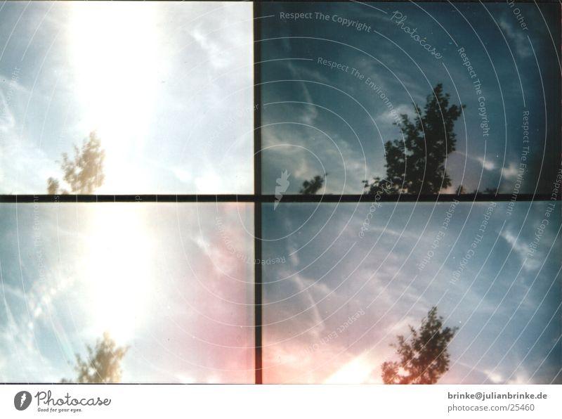 Scotty - Energy Baum Wolken Aktion Krefeld Sonne Himmel Lomografie sampler Wind blau julian brinke tree sun clouds Meerschweinchen