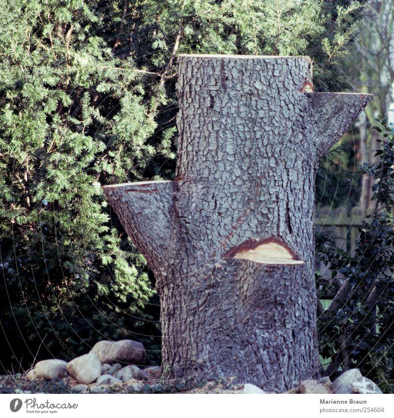 Zweites Leben Natur grün Baum gelb Garten Stein braun 3 Ast Baumstamm kurz Baumrinde Rest gefallen Ablage