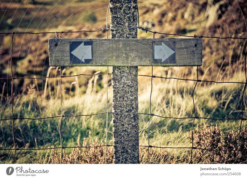 links oder rechts? oder wie oder watt? Natur grün Pflanze Wiese Umwelt Landschaft Wege & Pfade Wetter braun Feld Klima Hinweisschild Christliches Kreuz Pfeil