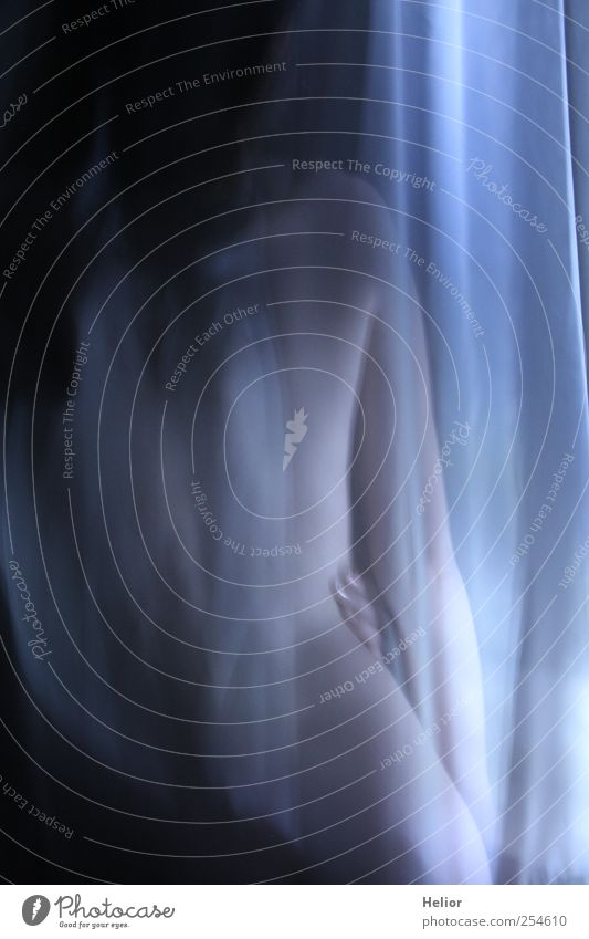 Verdeckte Schönheit 1 Mensch blau schön weiß nackt schwarz Weiblicher Akt Erotik feminin Rücken stehen ästhetisch berühren geheimnisvoll dünn Leidenschaft