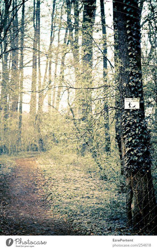 In Passage Natur Landschaft Pflanze Erde Herbst schlechtes Wetter Baum Efeu Wald Schilder & Markierungen Hinweisschild Warnschild braun gelb grau grün