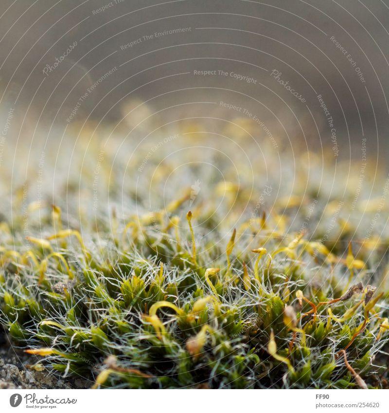 Ohne Moos... Natur Pflanze Herbst Umwelt Wachstum Moos