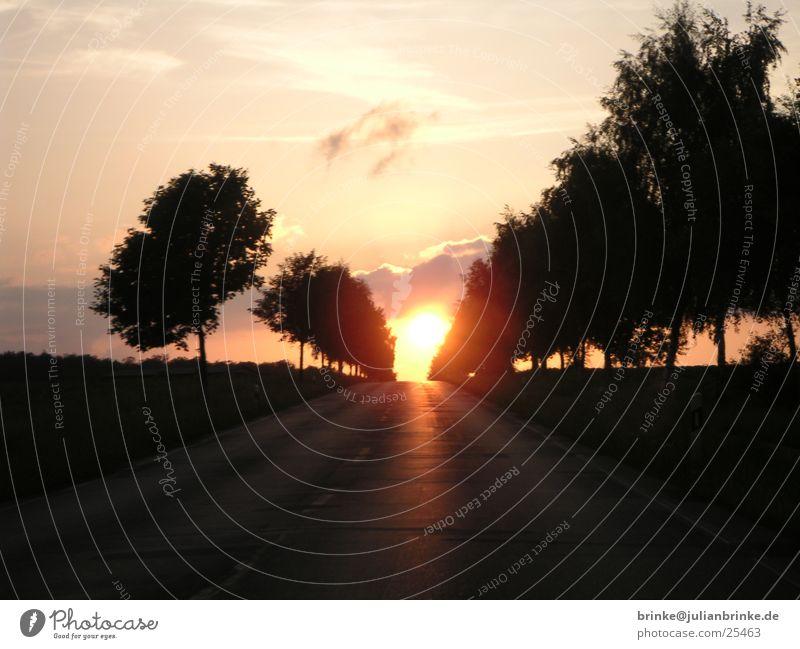 Ab in die Sonne Sonnenuntergang Stimmung dunkel Baum Heide Krefeld Verkehr hell julian brinke Meerschweinchen