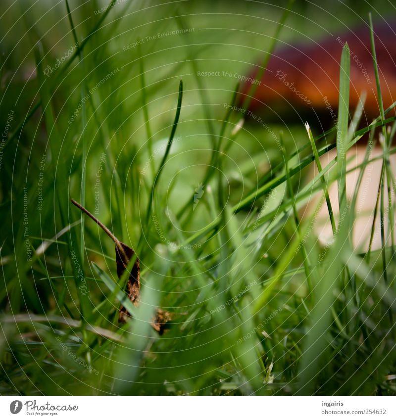 Entdeckung Steinpilze Speisepilz Pilze Pilzsuche Ausflug wandern Umwelt Natur Landschaft Pflanze Sommer Herbst Gras Waldpilz stehen Wachstum lecker natürlich