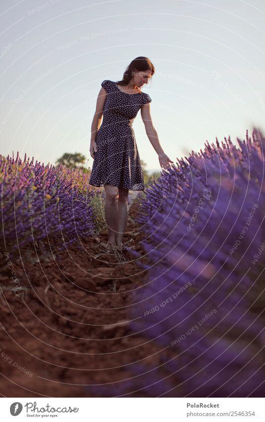 #A# Lila-Blau Kunst ästhetisch Provence Frankreich violett Lavendel Lavendelfeld Lavendelernte Blühende Landschaften Idylle friedlich Fernweh laufen Spaziergang