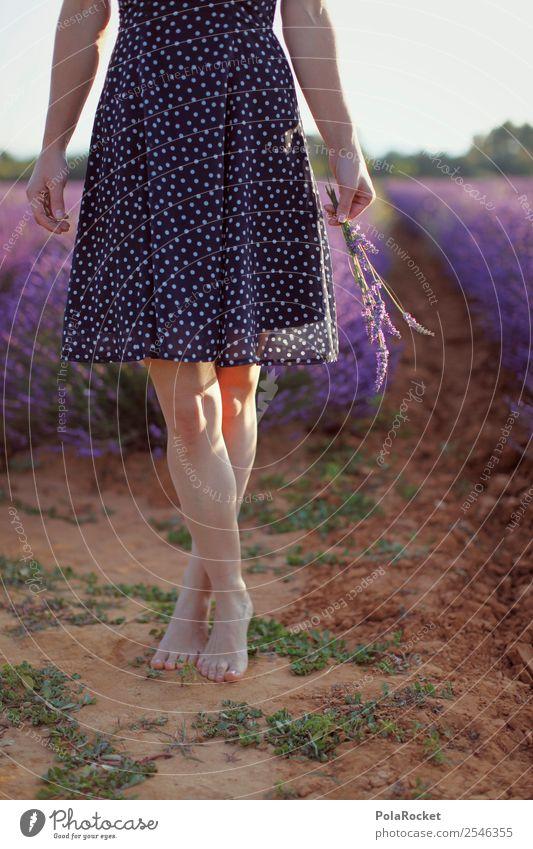 #A# Leichtigkeit Kunst ästhetisch Zufriedenheit Barfuß violett Lavendel Lavendelfeld Lavendelernte Kleid Provence Frankreich Beine Außenaufnahme pflücken