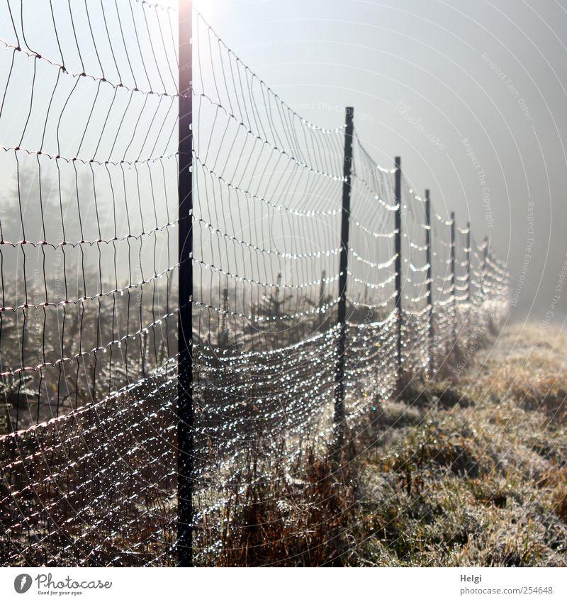 Moschndrohtzäun... Umwelt Natur Landschaft Pflanze Herbst Schönes Wetter Nebel Eis Frost Baum Gras Nutzpflanze Wildpflanze Tanne Wiese Schonung Zaun Zaunpfahl