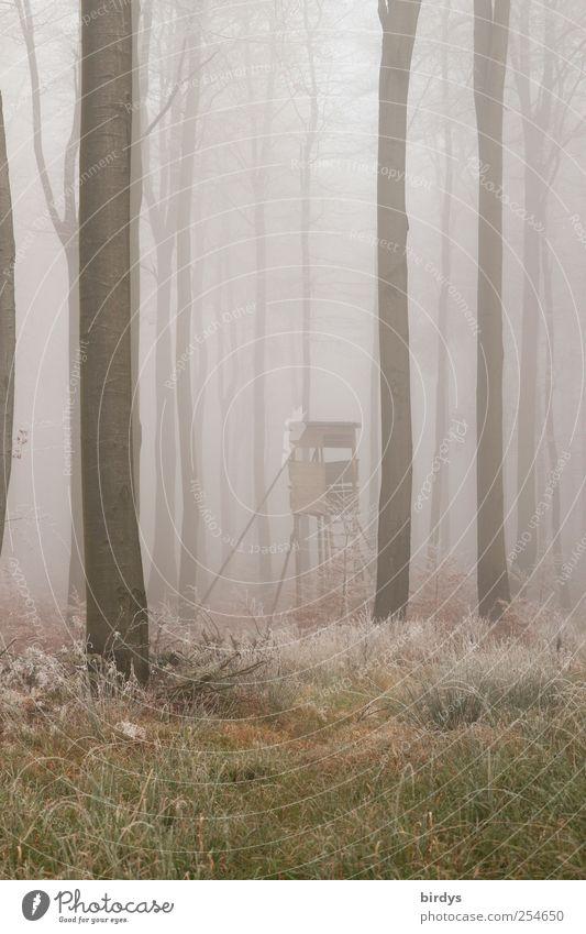 Faszinierende Wandlung.. Natur Baum Einsamkeit Wald Herbst kalt Gras Nebel außergewöhnlich Wandel & Veränderung Frieden bizarr unklar Raureif Waldboden Hochsitz