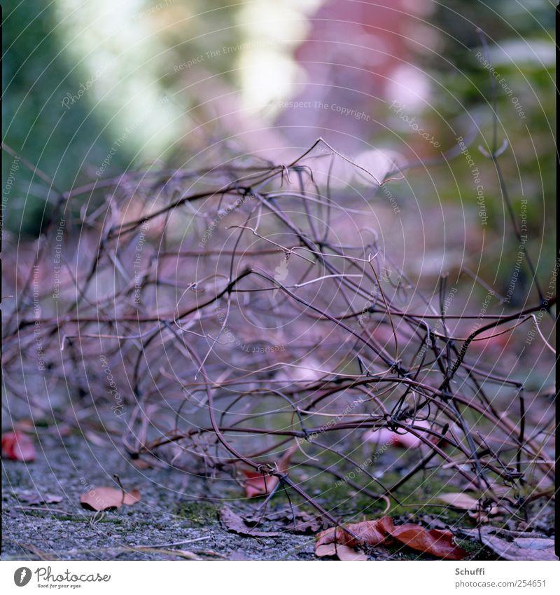 Bokeh-Monster Natur Herbst Pflanze Sträucher verblüht dehydrieren ästhetisch schön Unschärfe Farbfoto Gedeckte Farben Außenaufnahme Detailaufnahme Muster