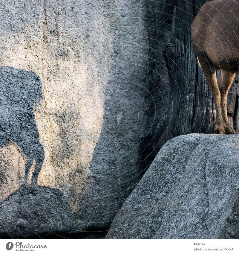Höhlenmalerei Freizeit & Hobby Ausflug Natur Schönes Wetter Park Felsen Tier Wildtier Fell Zoo Huf Hinterbein Ziegen Bergziege 1 stehen braun Felszeichnungen
