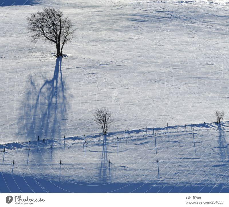 FRdrumrum | Schattenwurf Landschaft Winter Eis Frost Schnee Pflanze Baum kalt weiß Berghang Weide Schattenspiel Zaun Sonnenlicht Außenaufnahme Menschenleer