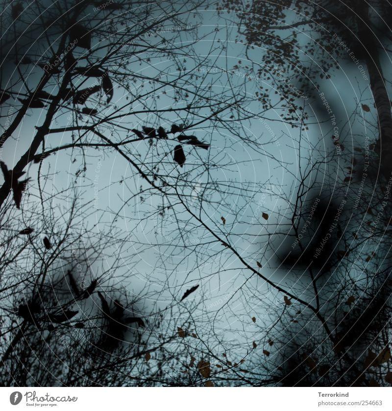 Nimm.mich.mit. Wald Blatt Herbst Winter Baum kahl Ast Unschärfe kalt.
