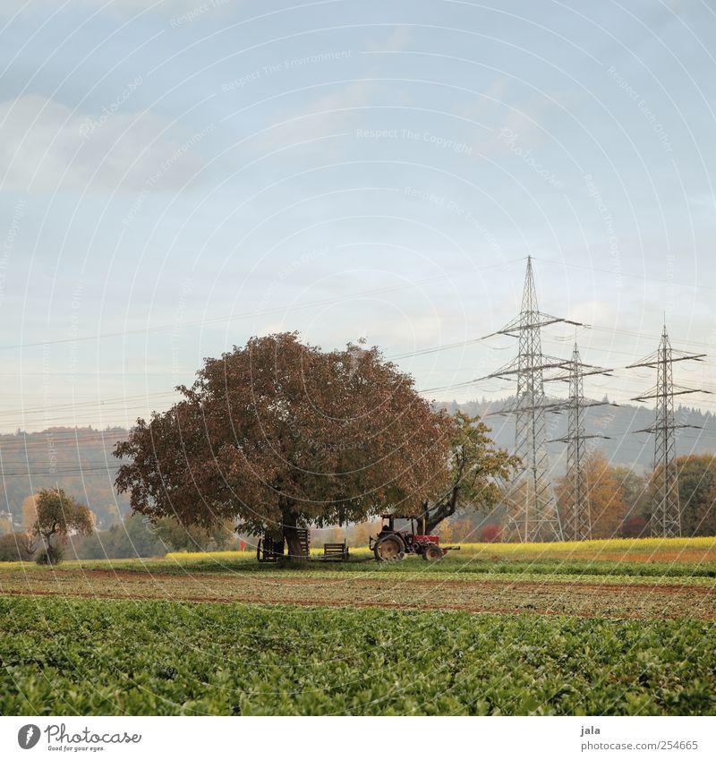landwirtschaft Landwirtschaft Forstwirtschaft Umwelt Natur Landschaft Himmel Herbst Pflanze Baum Grünpflanze Nutzpflanze Feld Traktor natürlich Strommast Ernte