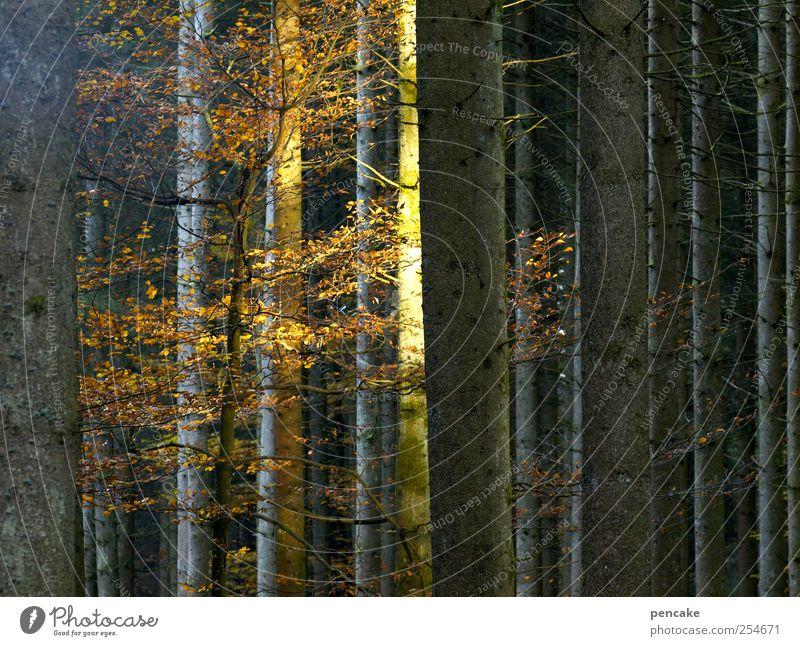 restlicht Natur Wald Herbst Stimmung Herbstlaub Abschied letzte Buche Lichteinfall
