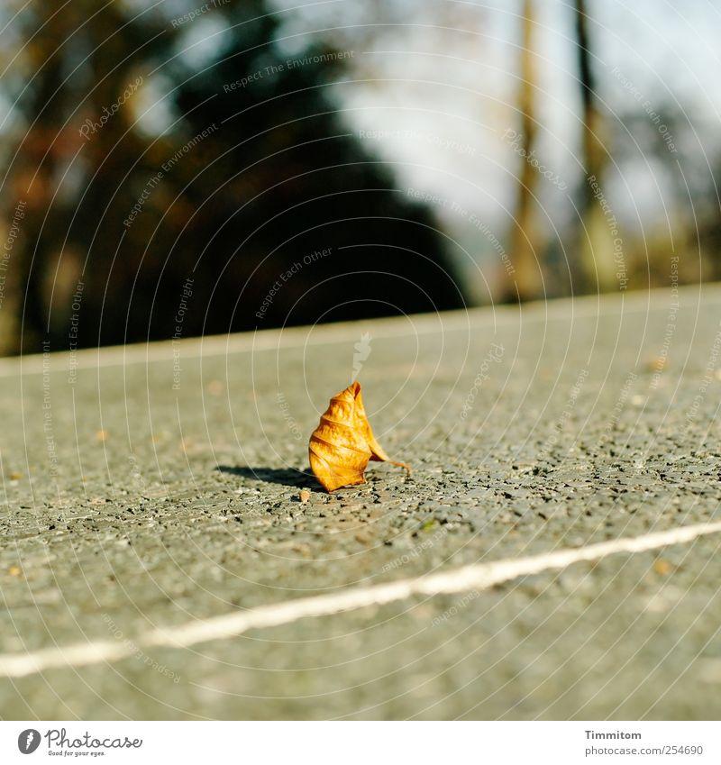 Ein großer Moment! weiß Pflanze Blatt Umwelt Herbst Spielen grau Stein Park Freizeit & Hobby Beton ästhetisch Streifen Sport-Training Begeisterung Erkenntnis
