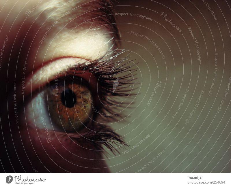 auge schön Körperpflege Kosmetik Schminke Wimperntusche feminin Auge schwarzhaarig brünett ästhetisch Momentaufnahme grün braun Augenfarbe Pupille