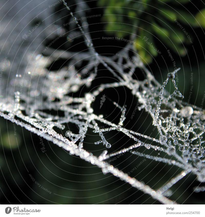 Eisperlen... Umwelt Natur Tier Wassertropfen Herbst Winter Frost Spinnennetz Netzwerk Tropfen Perlenkette glänzend hängen ästhetisch authentisch außergewöhnlich