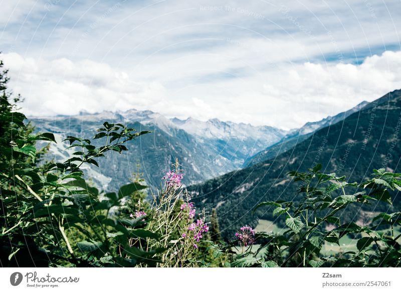 Pitztal / Austria Berge u. Gebirge wandern Umwelt Natur Landschaft Himmel Wolken Sommer Schönes Wetter Blume Sträucher Alpen Gipfel ästhetisch frisch nachhaltig