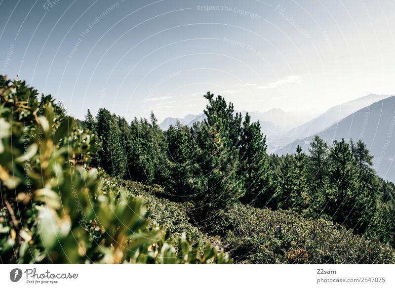 Pitztal Berge u. Gebirge wandern Umwelt Natur Landschaft Himmel Sommer Sträucher Wald Alpen Gipfel ästhetisch einfach nachhaltig natürlich blau grün ruhig